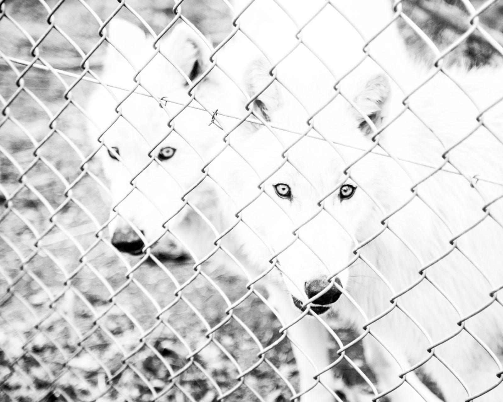 rachel_bandit_photography_vie_chienne11