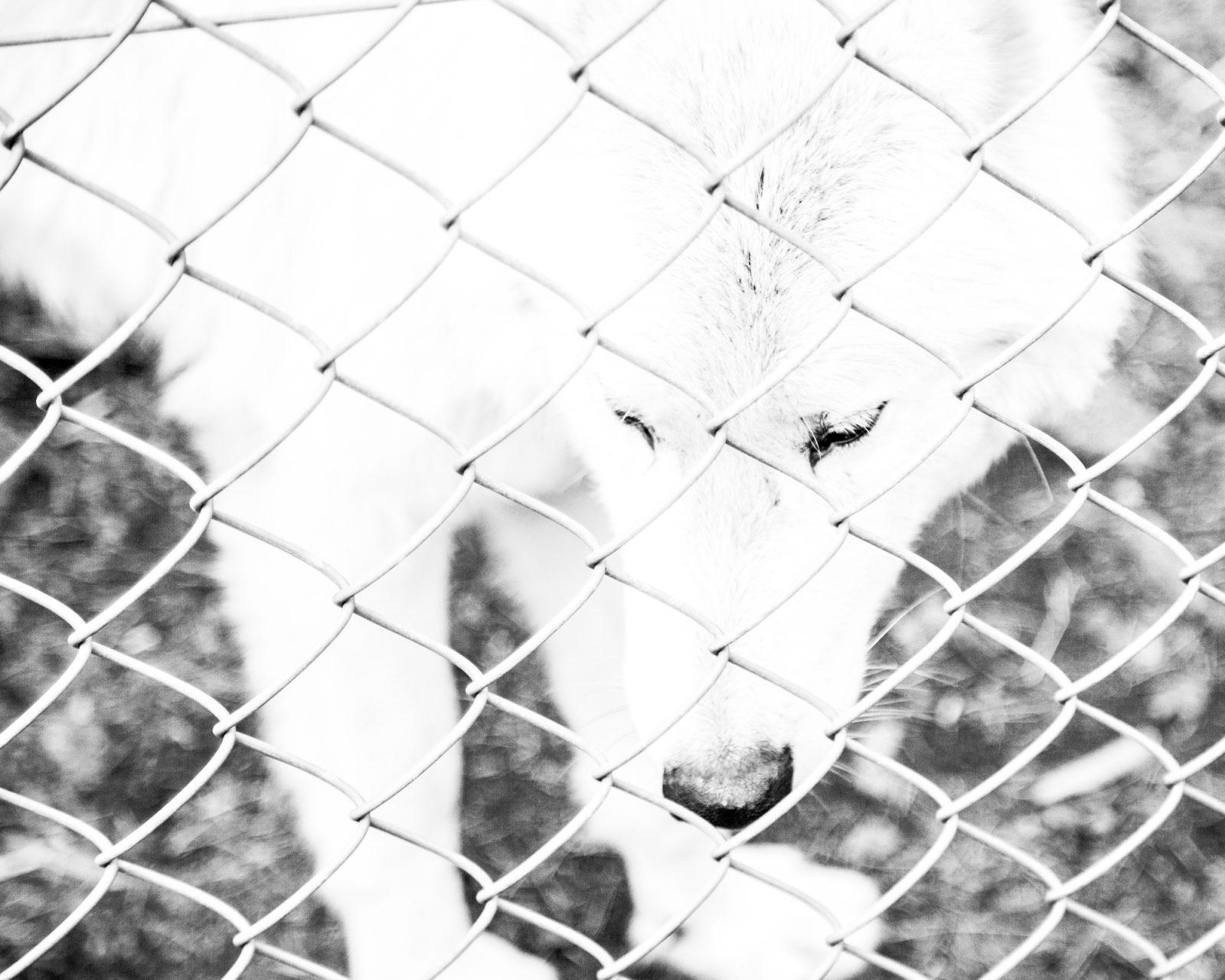 rachel_bandit_photography_vie_chienne12